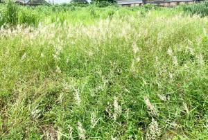 Residential Land Land for sale Ajayi Apata Estate Sangotedo Ajah Lagos