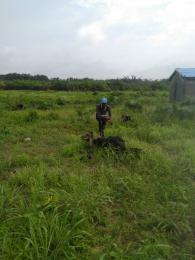 Commercial Land Land for sale Close to pan Africa school  Off Lekki-Epe Expressway Ajah Lagos