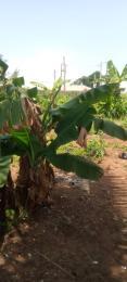 5 bedroom Land for sale Agunfoye Igbogbo Ikorodu Lagos