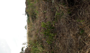 Residential Land Land for sale benin city Oredo Edo