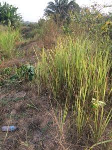 Residential Land Land for sale - Ebute Ikorodu Lagos