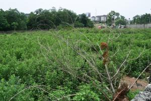 5 bedroom Residential Land Land for sale Katampe Main Abuja