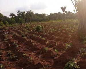 Mixed   Use Land Land for sale   Omi Adio Ibadan Oyo