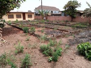 Land for sale Santos Estate Dopemu Ikeja Akowonjo Alimosho Lagos