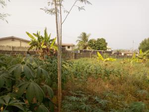Residential Land Land for sale Alaafia Street, Ayilara Estate, Oluyole extension Oluyole Estate Ibadan Oyo