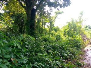 Mixed   Use Land Land for sale isokun village, near Ilaji resort off Akanran road Ibadan Oyo