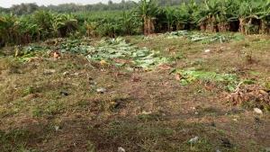 Mixed   Use Land Land for sale Kobape Adatan Abeokuta Ogun