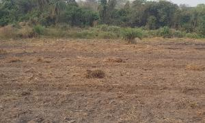 Land for sale Idiya village Off iseyin Oyo Road 25 minutes drive from the expressway Iseyin Oyo