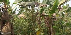 Joint   Venture Land Land for sale Off Eric Moore Eric moore Surulere Lagos