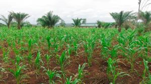 Land for sale Mokoloki Via Mowe Ofada Obafemi Owode Ogun