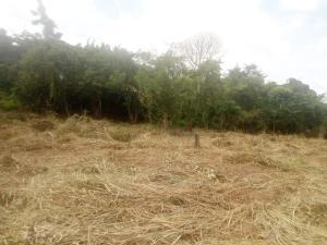 Residential Land Land for sale Ologbo Estate, off Ologuneru-Ido road, Ologuneru Ibadan Oyo