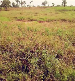 Residential Land Land for sale nkanu east Nkanu Enugu
