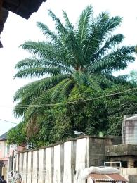 Commercial Land Land for sale Meiran Abule Egba Abule Egba Lagos