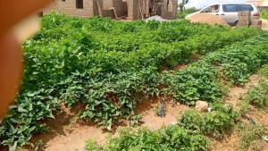 Residential Land Land for sale Kariji, off yakowa Ibrahim Express Chikun Kaduna
